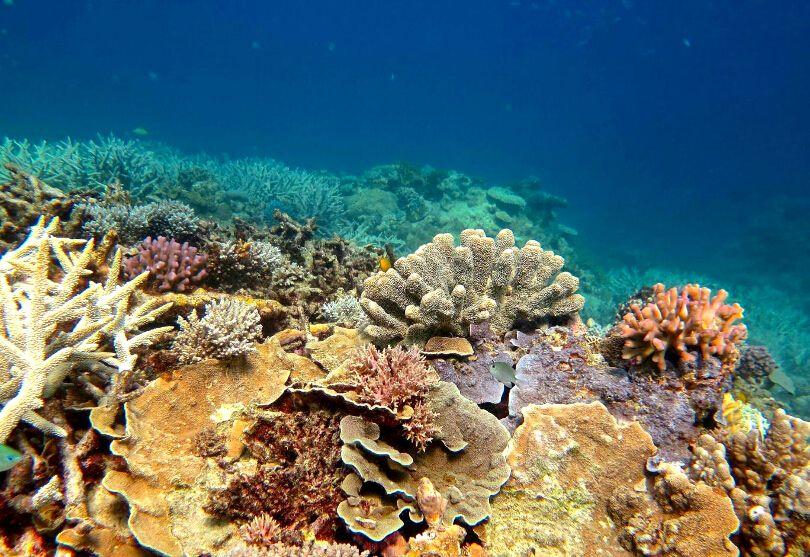Underwater photo of the amazing Great Barrier Reef in Queensland, Australia