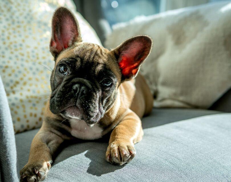 free-accommodation-pet-sitting